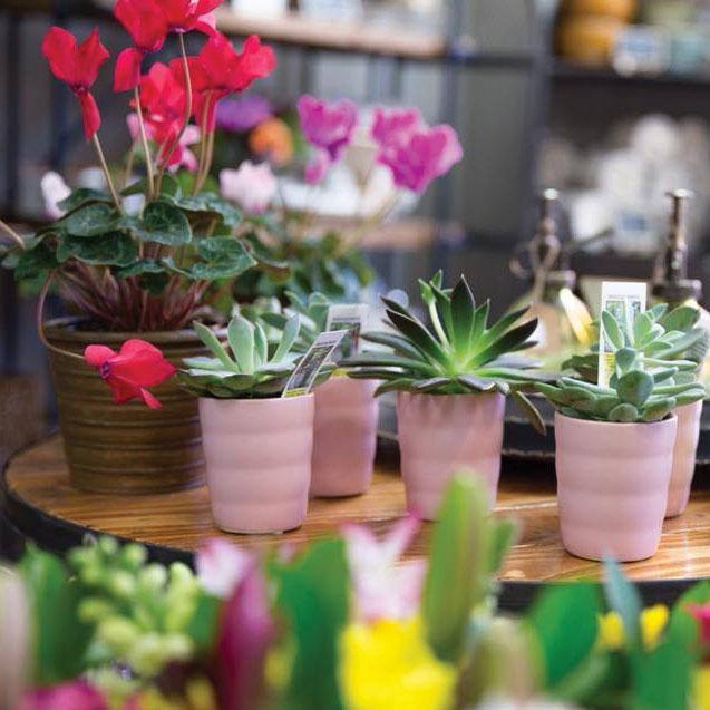 floral-fete-page-picture